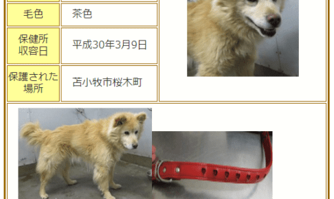 苫小牧で保護された愛犬