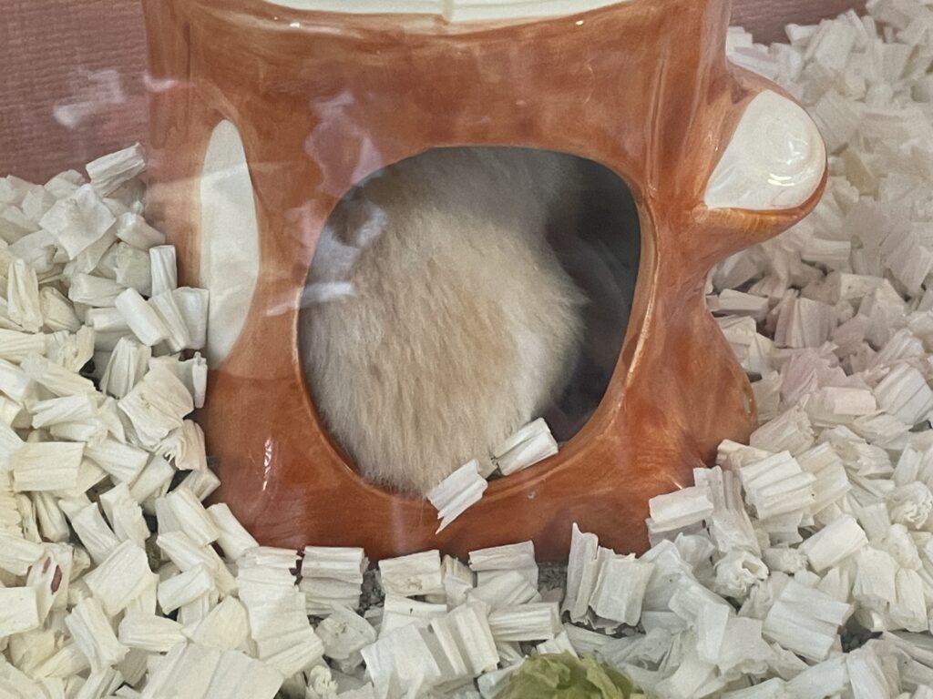 巣に戻ったハムスターの赤ちゃん